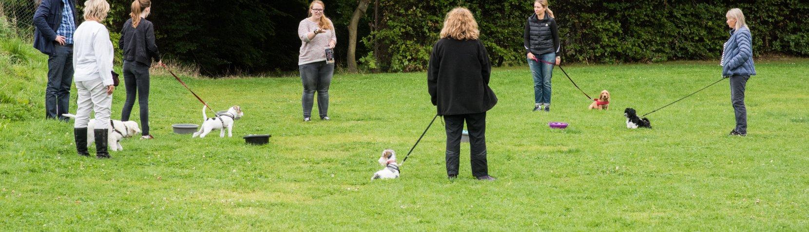 Hundeskole