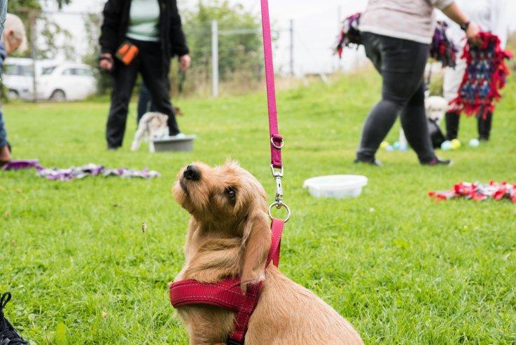 Vedbæk hundeklub